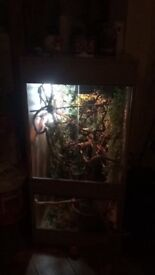 vivarium h 4ft d 2ft w 2ft all ready to go with loads of vines and foliage