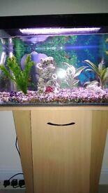 Fish tank set Stand beech effect, filter, gravel, Coral reef Ornament, Tank, new bulb, nets etc