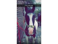 6yr old gypsy cob 13'2Hh FOR PART LOAN