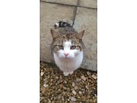 home needed for 2 1/2 cat
