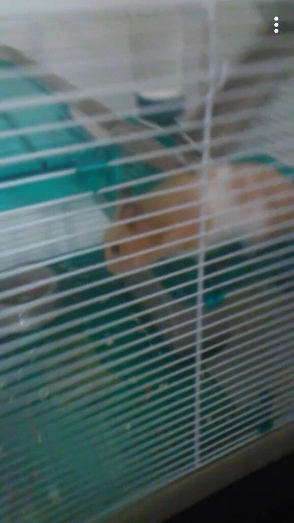 FREE TO GOOD HOME HAMSTER and cage