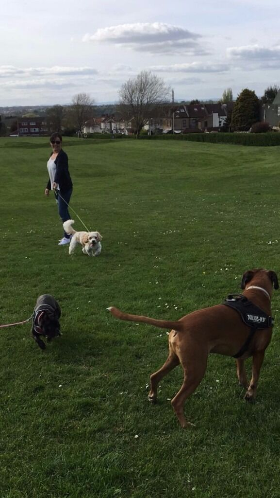 Image 1 of 9Dog walkers  Boarders and Sitters in Bristol and Bath   in  . Dog Walkers Bath Area. Home Design Ideas