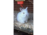 beautiful baby rabbits. 2 different litters. 2 ready 29th Feb and 2 ready 13th March.