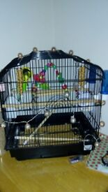 Budgie cage and X2 budgies