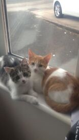 2 Cats - brother & sister - Pebbles & Ginge