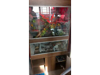vivarium and stand for sale