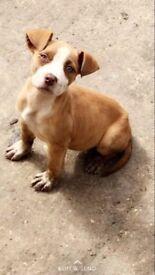 9 month old puppy