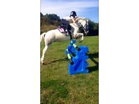 Stunning Competition Pony 13HH
