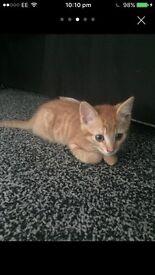 2 kittens male/female