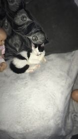 12 weeks old kitten