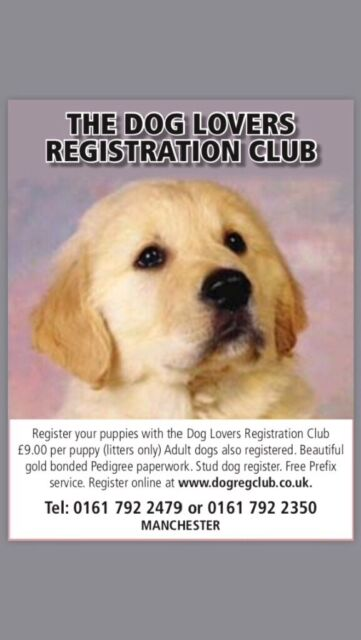 Need Pedigree papers for your puppies | in Salford, Manchester | Gumtree