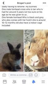 Two beautiful rabbits male and female