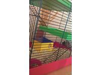dawrf hamster