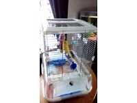 3 month old budgie with cage lovely little girl