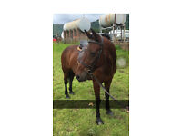 ** Horse for loan **