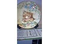 Royal Worcester China Kitten Collector Plate 'CAT NAP' With Numbered Certificate,Boxed