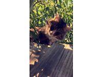 Lost cat! :(