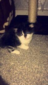 Kittens for sale , male & female.