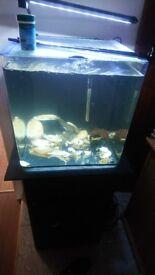 Cune fish tank