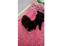 2 male kittens for sale