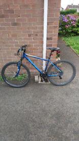 Mens adult carrera bicycle in good order £150