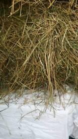 Small bales Hay