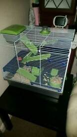 Female dwarf hamster ready now everything included