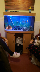 Juwel Vision Fish Tank