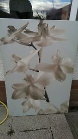 Flower photo canvases