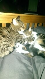 **NEW HOME NEEDED** 2 male cats, both neutered, genuine reason for rehoming.