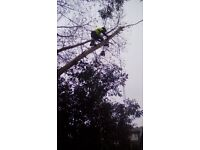 Fully insured nptc qualified arborist / tree surgeon / tree felling / tree surgery / forestry