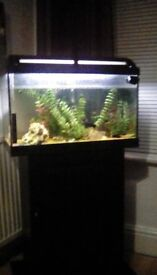 Fishtank with full setup and 12 tropical fish