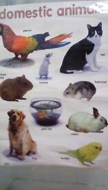 Free kids poster pets