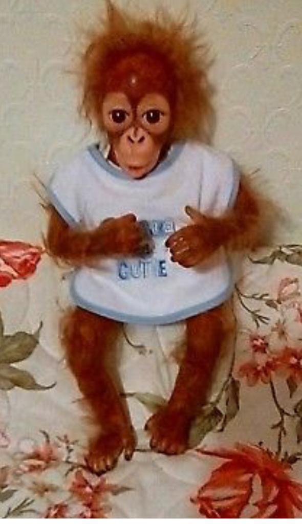 Re Born monkey