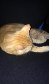2 kittens for sale £55 each