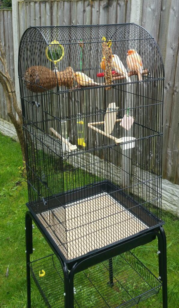 4 canary birds with cage
