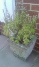 Stone planter