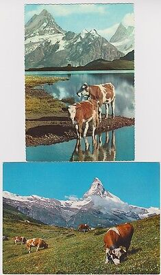 SWITZERLAND Two, mountain views with cattle, unused