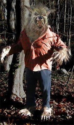 Studio Quality Werewolf Halloween Costume