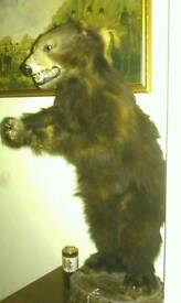 Wanted! Taxidermy bears ANY CONDITION