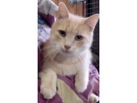 Ginge would love you to be his new Mum or Dad
