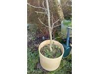 Trees, shrubs and plants, hedging