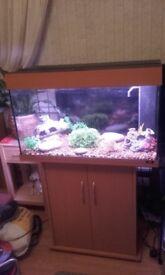 Juwel fish tank & stand (full tropical set up)