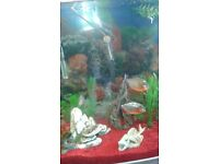 """""""""""3 Young Red Bellied Piranhas"""""""""""