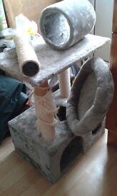 Large cat Activity tree