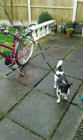 Bicycle dog running leash