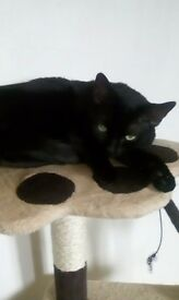 Male cat needs rehomed asap