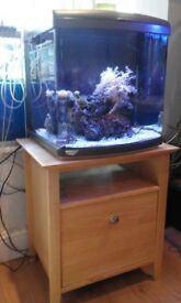 Marine fish tank Aquarium with a sump.