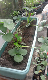 ☺ STILL HERE! indoor and outdoor plants, fruit and vegetable plants