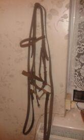 horse ridding gear